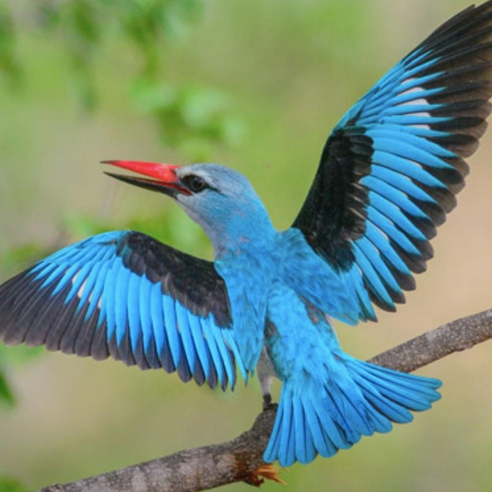 Birding_Muluwa_SouthAfrica1