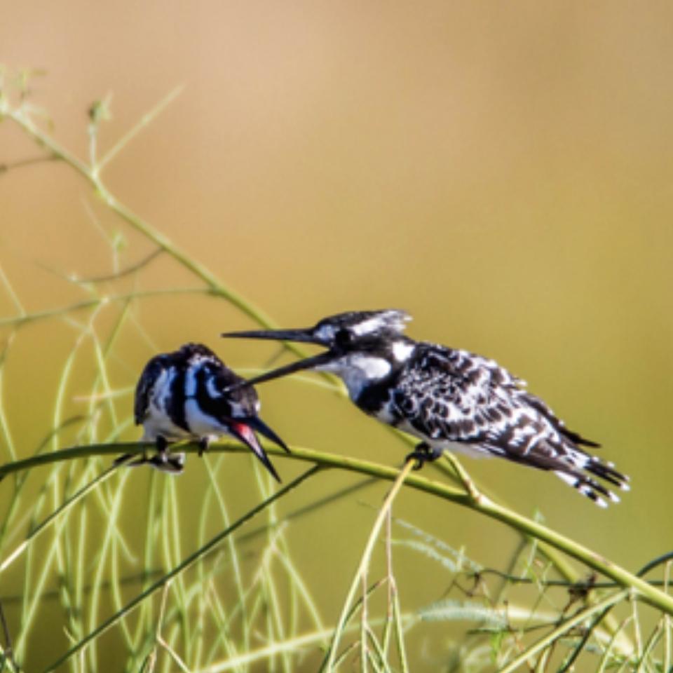 Birding_Muluwa_SouthAfrica3