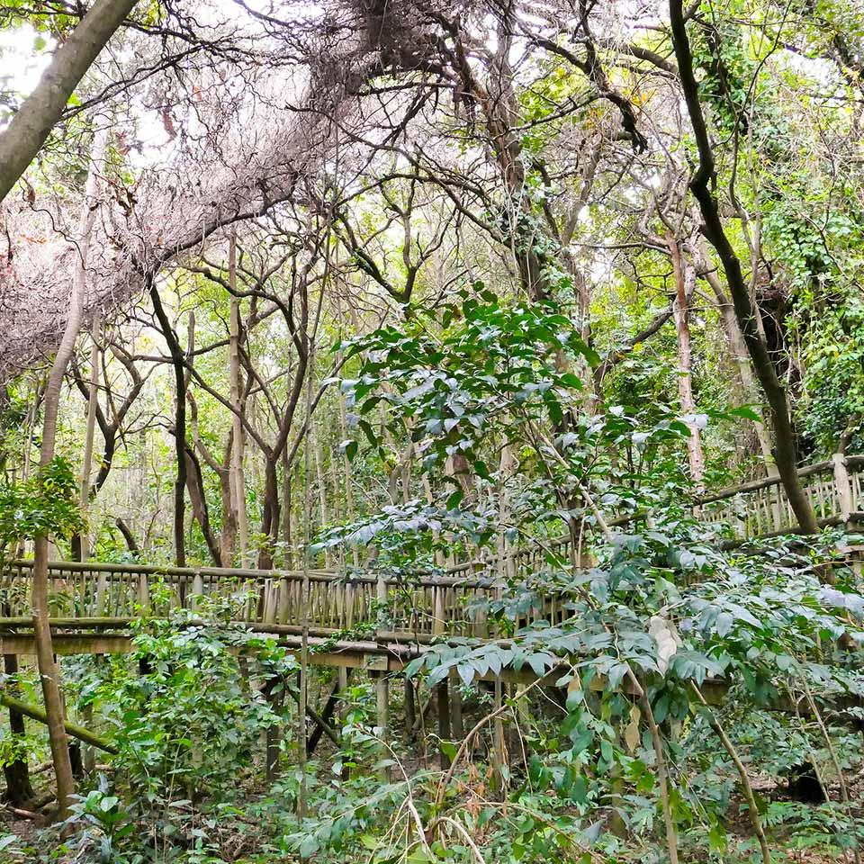 Lowveld_botanical_gardens_mpumalang
